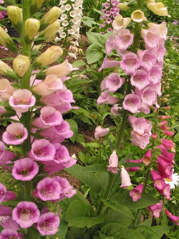 gua redecorate consejos para elegir plantas de exterior